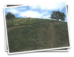 Photo of Juniper Trail after revegetation
